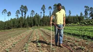 Plantio baseado no uso de palha atrai agricultores em Avaré - Plantio baseado no uso de palha atrai agricultores em Avaré.