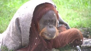 Animais do zoológico do Rio recebem tratamento especial no inverno - Medidas pra combater o frio vão de cobertor a alimentação reforçada.