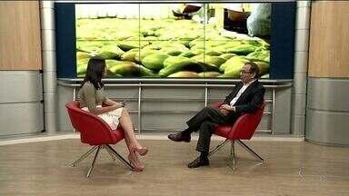 Maior exportação de mamão do Brasil é Linhares, no Norte do ES - Para manter a posição, produtores seguem critérios rigorosos de qualidade.