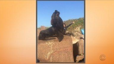 Leão-marinho é flagrado na praia da Galheta, em Florianópolis - Leão-marinho é flagrado na praia da Galheta, em Florianópolis