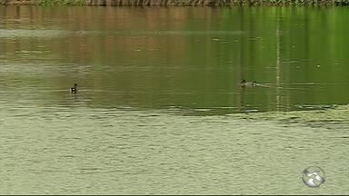 Barragens enchem após chuvas na Região - Alguns reservatórios continuam secos.