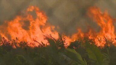 Rondônia é o 4° estado da Amazônia Legal com focos de calor - Veja o ranking das cidades.