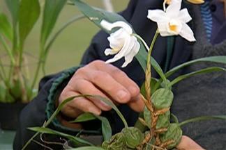 Curso dá dicas sobre cultivo de orquídeas em Mogi das Cruzes - Atração faz parte do Festival de Inverno de Mogi das Cruzes. Curso ocorrerá no sábado (22), das 9h às 11h.