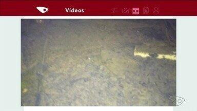 Telespectador envia imagem de área alagada em Linhares - Larvas que podem ser de mosquito aparecem no vídeo.