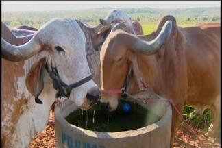 Frio gera reflexos no campo em Pompéu - Queda na temperatura faz com que vacas produzam menos leite.