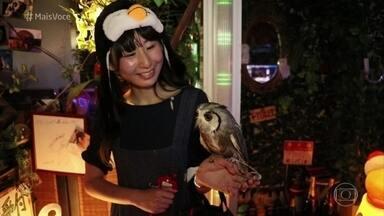 Corujas são a atração de bar em Tóquio - Local abriga 70 aves de cerca de 15 espécies, que podem interagir com os clientes