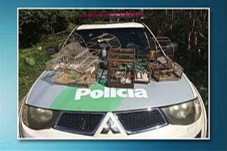 Polícia Ambiental de Ferraz apreende pássaros silvestres em casa - Pássaros foram apreendidos em gaiolas penduradas nas paredes de casa no bairro Cambiri.