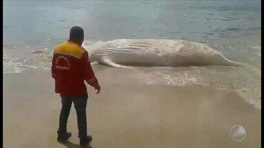 Corpo de baleia jubarte é encontrado em Itacimirim; veja na Previsão do Tempo - Saiba como fica o tempo no estado.