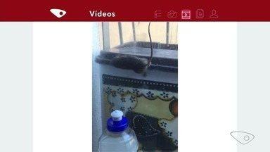 Bairro Santa Inês, em VIla Velha, sofre com infestação de ratos - Nós procuramos a prefeitura de vila velha que preferiu mandar uma nota informando que a secretaria de serviços urbanos vai providenciar uma limpeza no cemitério.