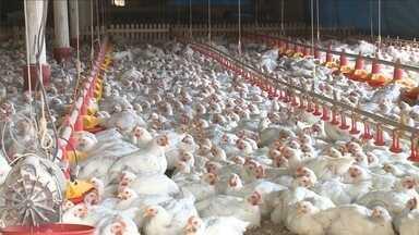Exportação de frango segue crescendo e estado já tem lucro superior a US$ 1 bi no ano - Exportação de frango segue crescendo e estado já tem lucro superior a US$ 1 bi no ano