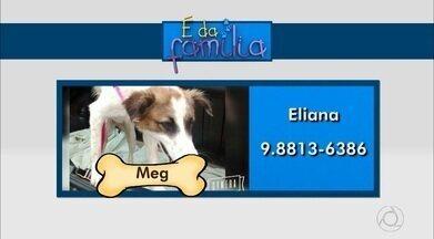 É da Família : ajude a localizar animais de estimação desaparecidos em João Pessoa - Veja os telefones de contato dos donos dos bichinhos.