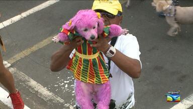 Donos de cachorrinhos estão nos preparativos finais para mais uma edição da Cãominhada - Donos de cachorrinhos estão nos preparativos finais para mais uma edição da Cãominhada, em São Luís (MA).