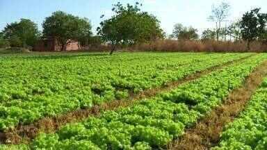 Setor de horticultura movimenta R$ 43 milhões no Tocantins - Setor de horticultura movimenta R$ 43 milhões no Tocantins