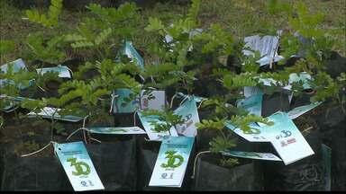 JPB2JP: Centenas de mudas de plantas são distribuídas no Alto do Céu em João Pessoa - Ação faz parte das comemorações dos 30 anos da TV Cabo Branco.