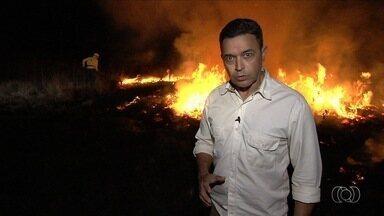 Confira os destaques do Jornal do Campo deste domingo (20) - Entre os principais assuntos está uso do fogo para combater incêndios, em Goiás.