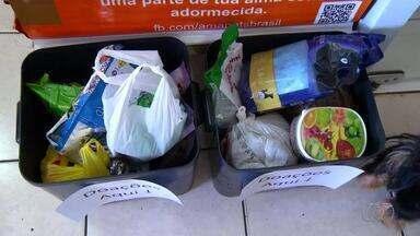 Encontro de cães arrecada doações para animais de rua em Palmas - Encontro de cães arrecada doações para animais de rua em Palmas