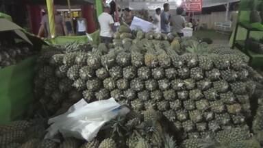 Produção de abacaxi tem safra recorde no AM - Produtores do interior comemoram safra.