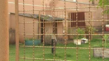 Criança de cinco anos é mordida por cão da raça pitbull em Sarandi - Um bebê de 11 meses também foi atacado por um cachorro da mesma raça em Maringá na sexta-feira (18).