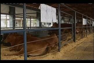 Expogenética é aberta oficialmente em Uberaba - Solenidade ocorreu na manhã desta segunda-feira (21). A maior feira de genética do país conta com cerca de 700 animais em exposição no Parque Fernando Costa.