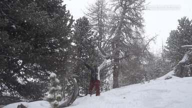 Snowboard Na Floresta