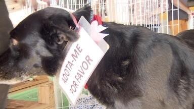 Animais ganham um novo lar em uma feira de adoção em Taguatinga - A feira de adoção no Alameda Shopping, em Taguatinga, continua amanhã, domingo (27), de meio dia às seis da tarde.