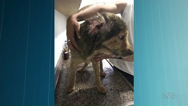 Três pessoas se queimam após usar arma de choque para acalmar cachorro - As pessoas tentavam passar pesticida no cachorro; o produto que é inflamável, explodiu