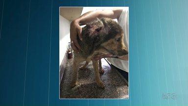 Acidente ao tentar aplicar pesticida em cachorro deixa três pessoas feridas - Uma explosão aconteceu quando uma das pessoas tentou dar um choque no cachorro enquanto aplicavam um pesticida altamente inflamável no cão