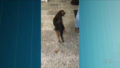 Feridos em explosão durante tratamento a cachorro têm quadros graves - Três pessoas estavam aplicando um medicamento no animal quando houve a explosão. Um dos feridos foi transferido para o hospital de queimados em Paranavaí.