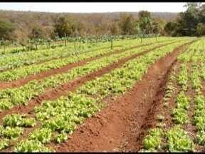 Irrigação é responsável pelo crescimento da produção em Três Marias - Os equipamentos instalados na lavoura foram ganhados de uma cooperativa.