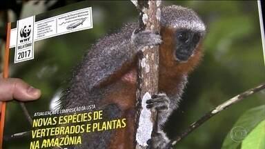 Em dois anos, cientistas descobrem mais de 300 espécies na Amazônia - São 216 plantas, 93 peixes, 51 répteis e anfíbios e 18 mamíferos. Bióloga ficou surpresa por descobrir novo primata - um zogue-zogue.
