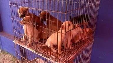 CCZ multa pessoas que abandonam animais em Campo Grande - Multas estão sendo aplicadas a pessoas que abandonam os animais nas ruas e no próprio Centro de Controle de Zoonoses (CCZ) da capital.