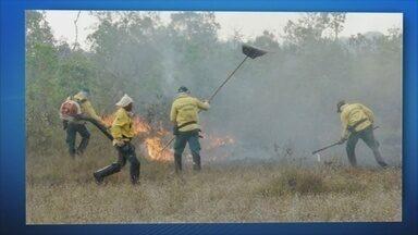 Incêndio destrói parte do Parque Naional dos Campos Amazônicos - Foram mais de 15 dias para controlar o fogo.