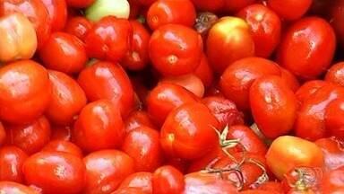 Produtores esperam aumento na safra de tomate em Goiás - Estado é o maior produtor do fruto no Brasil.
