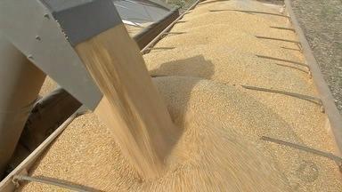 Venda de silos-bolsas bate recorde em MT - Alternativa para armazenar os grãos ajuda a manter parte da produção na fazenda.