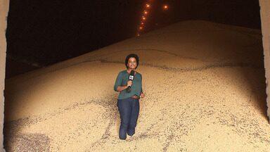 Agricultores comemoram uma super safra de soja na região oeste - A safra ajuda em toda uma cadeia que vai da geração de empregos à exportação.