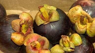 Conheça a fruta Mangostão - Conheça a fruta Mangostão.