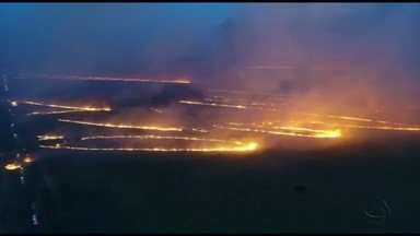 Incêndio destrói pastagens e plantações de eucalipto em Ribas do Rio Pardo, em MS - O fogo atingiu seis fazendas e deixou vários prejuízos na região.