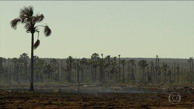 Fogo consome veredas do cerrado mineiro e ameaça florestas e rios - Dos 109 quilômetros de extensão do Rio Peruaçu, 80 estão secos.São Francisco está tão raso que bancos de areia surgem no meio do rio.