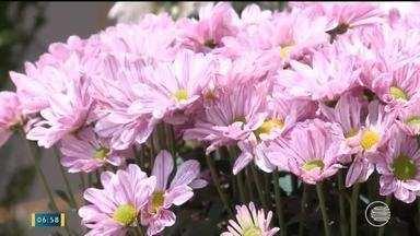 Neurologista piauiense comprova cientificamente que o perfume de flores desperta enxaqueca - Neurologista piauiense é o primeiro do mundo a comprovar cientificamente que o perfume das flores desperta a enxaqueca