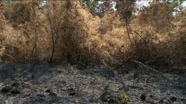 Morro de Andorinhas pega fogo e chamas ficam próximas a condomínio fechado em Cachoeiro - Na última semana, outro incêndio destruiu a vegetação do local.
