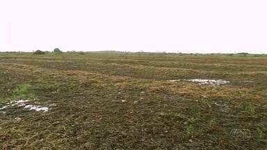 A partir de domingo, produtores estarão liberados para o plantio de soja - A partir de domingo, produtores estarão liberados para o plantio de soja