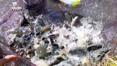 Parte 3: Cresce a produção de pescado em Rondônia - Tradicionalmente conhecida pela cultura da soja, nos últimos dois anos a psicultura tem se destacado na região.