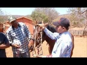 Conheça técnicas utilizadas para domar os cavalos e manter uma boa relação com eles - Manejo na fazenda é fundamental para a boa relação do homem com esses animais.