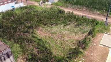Detetive Virtual investiga se ovni teria pousado em Peruíbe, no litoral de SP - Plantas típicas de áreas alagadas teriam envergado de uma hora para outra. Vizinhos dizem ter ouvido um barulho estranho e visto uma luz muito forte.