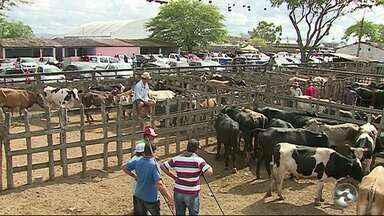 Policiamento é intensificado na feira de gado em Caruaru - Comerciantes estão satisfeitos com o aumento no policiamento.
