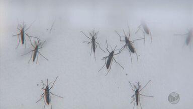 Casos de Febre Chikungunya aumentaram 3000% em um ano - Casos de Febre Chikungunya aumentaram 3000% em um ano