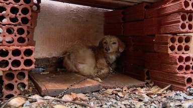 Você sabe o que fazer se seu animal de estimação apresentar sintomas de Leishmaniose? - Em Foz do Iguaçu, casos preocupam autoridades.