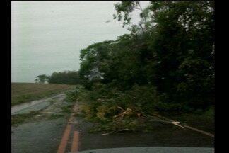 Estragos com o temporal em Santa Rosa, RS - A cidade está sem água e deve ser restabelecido o abastecimento até o fim do dia.