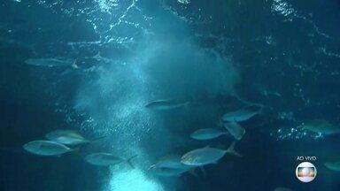 Aquário do Rio comemora um ano - Aquario completa um ano.