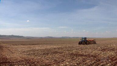 Agricultores do Paraná estão no fim da plantio de soja - No noroeste a chuva comprometeu a produção de arroz.